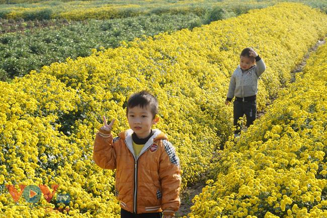 Làng Nghĩa Trai vào mùa thu hoạch hoa cúc chi - Ảnh 18.