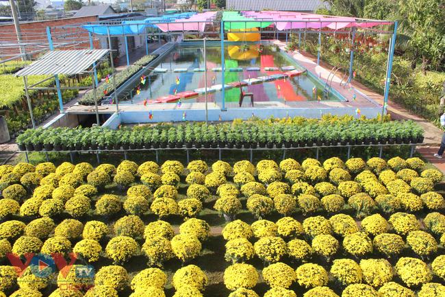Làng hoa hơn 100 tuổi Sa Đéc tất bật vụ hoa Tết - Ảnh 6.