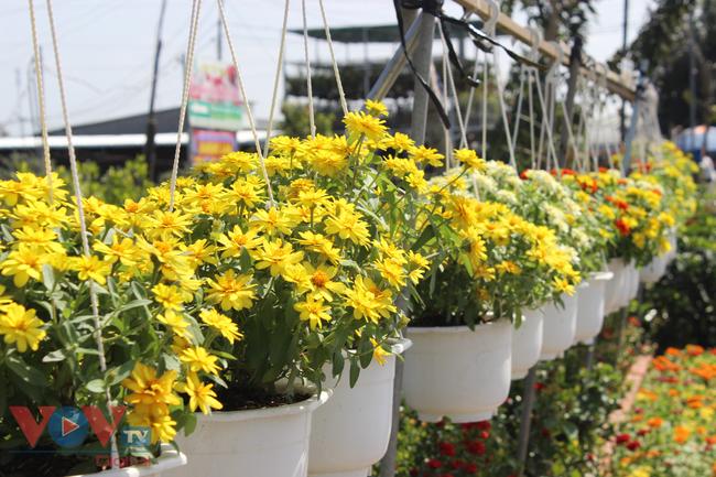 Làng hoa hơn 100 tuổi Sa Đéc tất bật vụ hoa Tết - Ảnh 18.