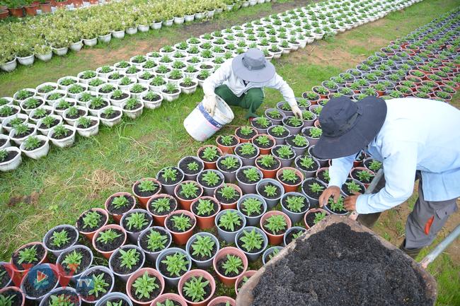Chùm ảnh: Làng hoa ngoại ô TPHCM tất bật vụ hoa Tết Tân Sửu 2021 - Ảnh 6.