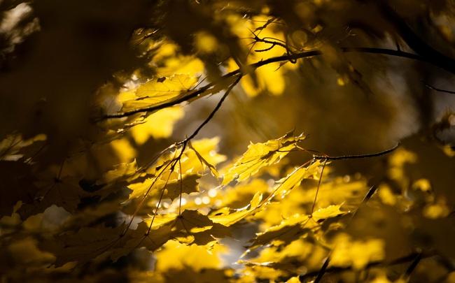 Say đắm vẻ đẹp mùa thu vàng nước Nga - Ảnh 4.