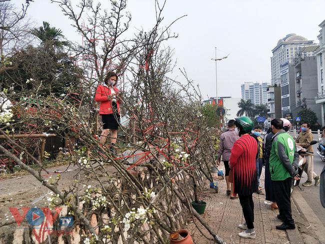 Hoa lê rừng đổ bộ xuống phố phục vụ người dân Thủ đô chơi Xuân - Ảnh 1.