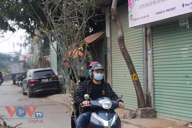Hoa lê rừng đổ bộ xuống phố phục vụ người dân Thủ đô chơi Xuân - Ảnh 13.