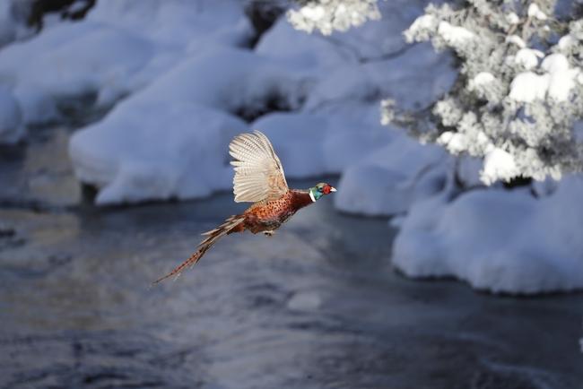 Không có gì gọi là giá lạnh, một số loài động vật vui vẻ khi tuyết rơi dày - Ảnh 13.
