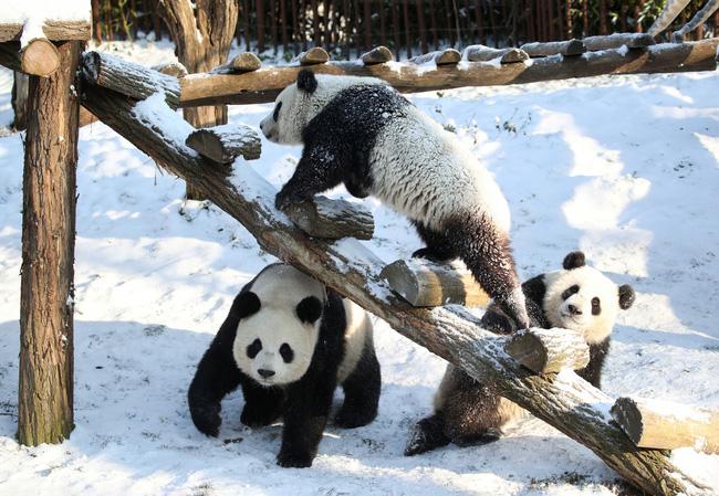 Không có gì gọi là giá lạnh, một số loài động vật vui vẻ khi tuyết rơi dày - Ảnh 9.