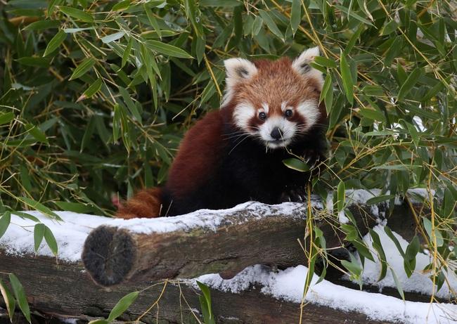 Không có gì gọi là giá lạnh, một số loài động vật vui vẻ khi tuyết rơi dày - Ảnh 8.