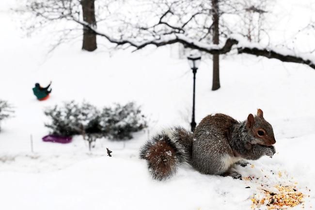 Không có gì gọi là giá lạnh, một số loài động vật vui vẻ khi tuyết rơi dày - Ảnh 1.