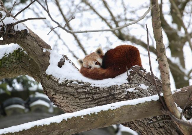 Không có gì gọi là giá lạnh, một số loài động vật vui vẻ khi tuyết rơi dày - Ảnh 7.