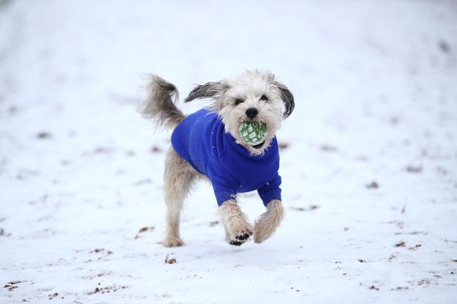 Không có gì gọi là giá lạnh, một số loài động vật vui vẻ khi tuyết rơi dày - Ảnh 4.