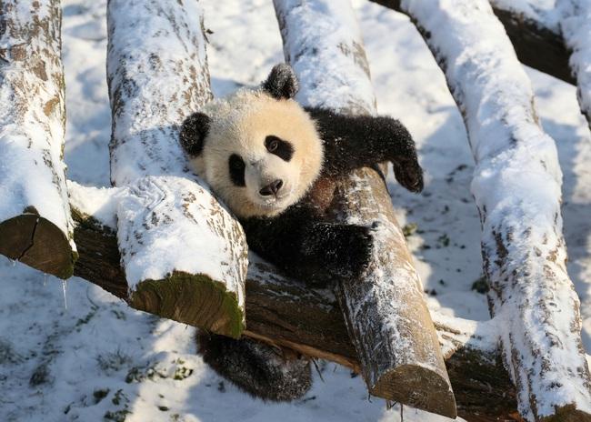 Không có gì gọi là giá lạnh, một số loài động vật vui vẻ khi tuyết rơi dày - Ảnh 10.