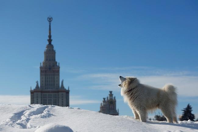 Không có gì gọi là giá lạnh, một số loài động vật vui vẻ khi tuyết rơi dày - Ảnh 2.
