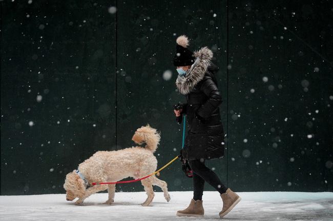 Không có gì gọi là giá lạnh, một số loài động vật vui vẻ khi tuyết rơi dày - Ảnh 3.