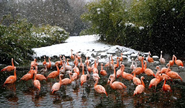 Không có gì gọi là giá lạnh, một số loài động vật vui vẻ khi tuyết rơi dày - Ảnh 12.