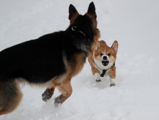 Không có gì gọi là giá lạnh, một số loài động vật vui vẻ khi tuyết rơi dày - Ảnh 5.