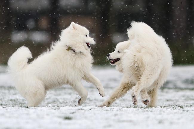 Không có gì gọi là giá lạnh, một số loài động vật vui vẻ khi tuyết rơi dày - Ảnh 6.