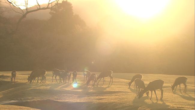 """Những điểm đến tuyệt đẹp trong """"12 Nét Đẹp Vùng Kansai Nhật Bản""""  - Ảnh 53."""