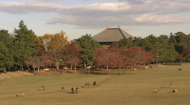 """Những điểm đến tuyệt đẹp trong """"12 Nét Đẹp Vùng Kansai Nhật Bản""""  - Ảnh 49."""