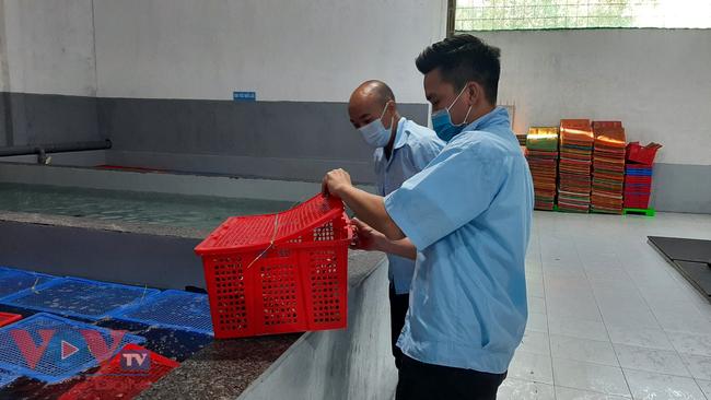 Bài 1: Công ty TNHH Linh Phát (Khánh Hòa) có làm trái Thông tư 48 về thẩm định chất lượng tôm hùm xuất khẩu sang Trung Quốc?. - Ảnh 2.