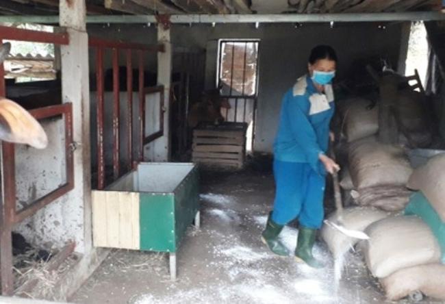 Bệnh lạ ở trâu, bò đang lan rộng khắp Hà Tĩnh - Ảnh 2.