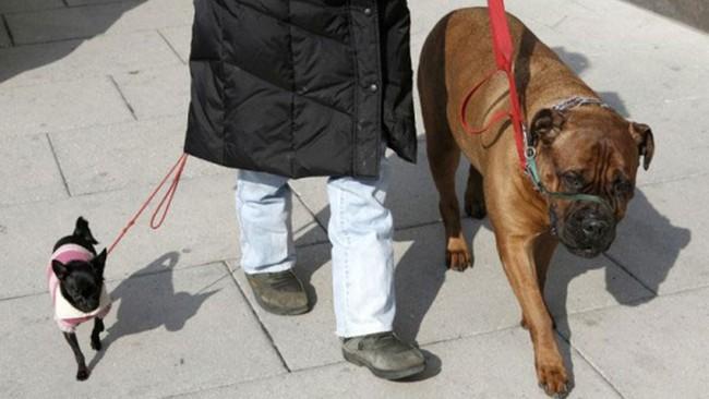 Biến thể COVID tại Anh B.117 có thể đột biến qua loài chó - Ảnh 3.