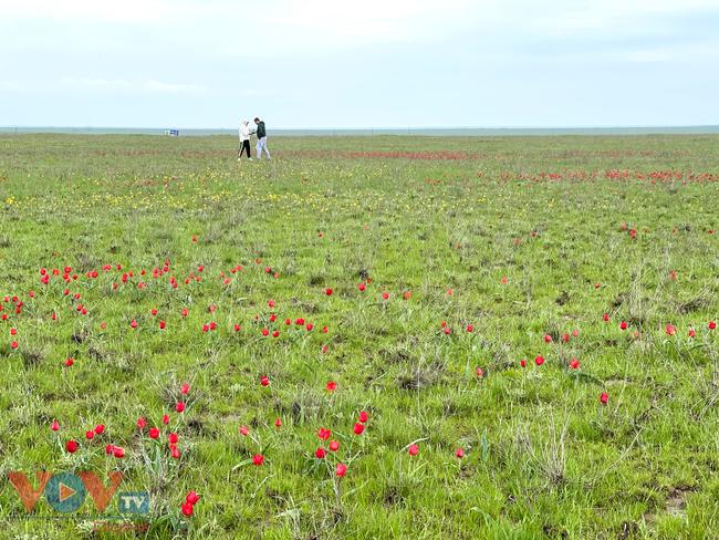 Hoà cùng sắc màu thảo nguyên Kalmykia tại lễ hội hoa tulip - Ảnh 10.