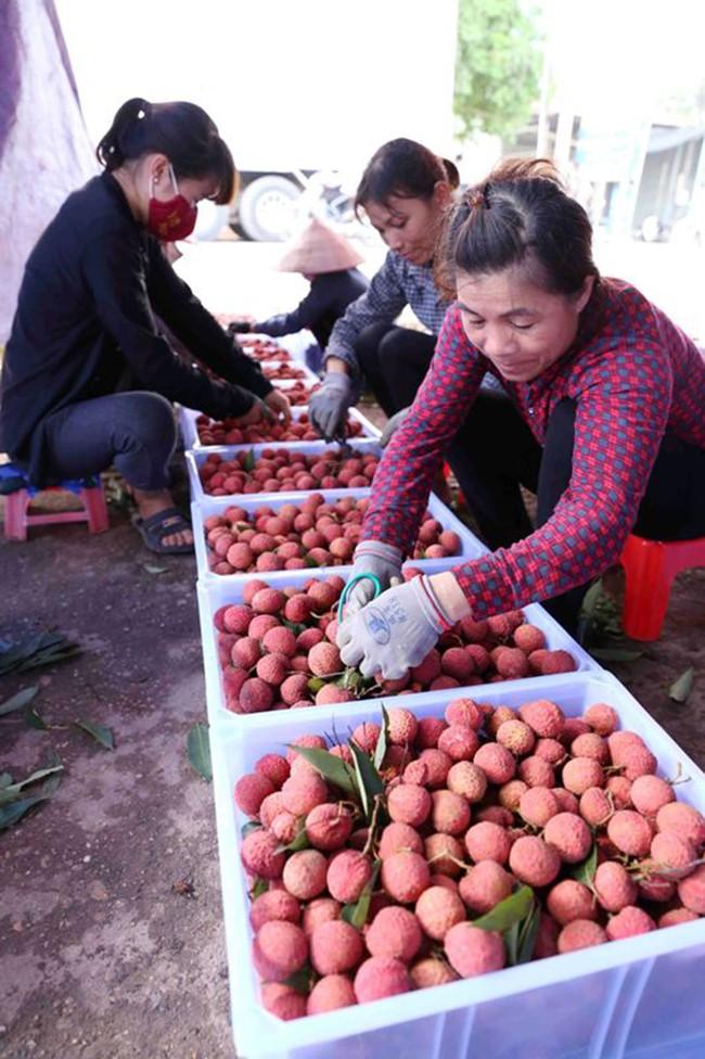 Thủ tướng Chính phủ chỉ đạo tháo gỡ khó khăn tiêu thụ nông sản cho Bắc Giang - Ảnh 1.