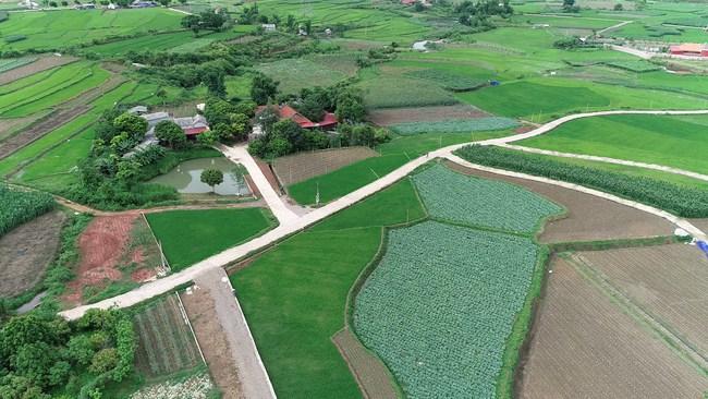 Rau trái vụ - Hướng đi hiệu quả cho người nông dân Mộc Châu  - Ảnh 3.