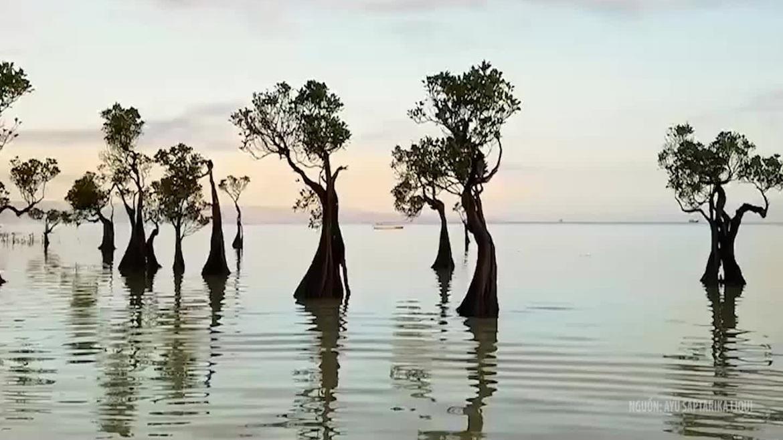 """Cây """"nhảy múa"""" trên đảo Sumba, Indonesia"""