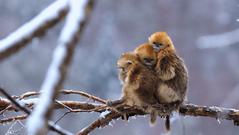 Cuộc sống của động vật hoang dã trong mùa đông lạnh giá ở Trung Quốc