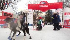 Hấp dẫn cuộc đua chó kéo xe trượt tuyết