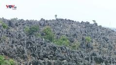 Vẻ đẹp của cao nguyên đá Tủa Chùa