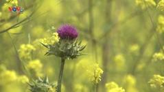 Mỹ: Du khách California tận hưởng mùa hoa nở rộ