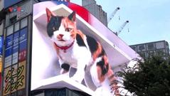 Mèo 3D siêu thực khổng lồ thu hút sự chú ý ở Tokyo