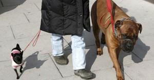 Biến thể COVID tại Anh B.117 có thể đột biến qua loài chó