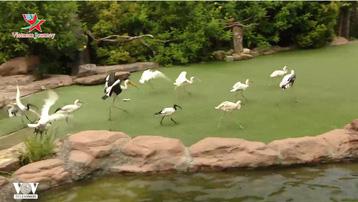 Gameshow động vật ở Phú Quốc