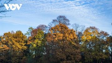 Chiêm ngưỡng phong cảnh mùa thu hữu tình tại Bỉ