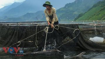 Cận cảnh trại cá tầm 100 tỷ đồng trên lòng Hồ thủy điện Sơn La