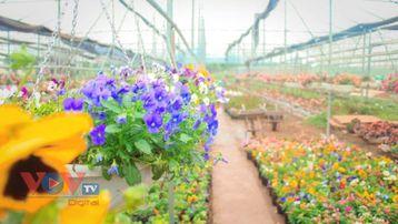 Vựa hoa cây cảnh lớn nhất miền bắc rộn ràng vào vụ Tết