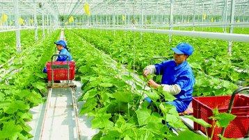 Doanh nghiệp vướng rào cản khi ứng dụng công nghệ cao trong nông nghiệp