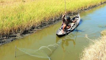 Cà Mau: Kết hợp làm du lịch cộng đồng để phát triển nhãn hiệu lúa sạch