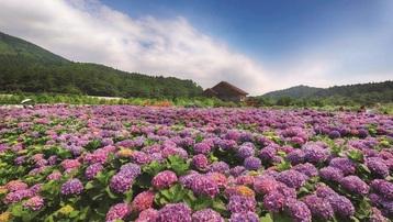 Khám phá chuyến đi đầy màu sắc qua những mùa hoa