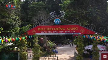"""Đến Sơn La dạo chơi ở """"Rừng Vàng"""""""