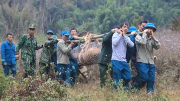 Sơn La: Đi chăn thả gia súc phát hiện quả bom nặng 600 kg