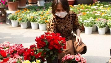 Chợ hoa rực rỡ những ngày cận Tết