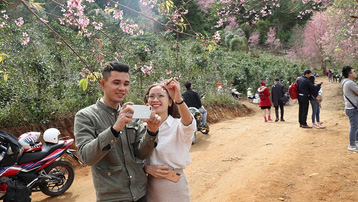 Lâm Đồng: Du khách đổ xô săn lùng thung lũng Mai Anh đào tuyệt đẹp
