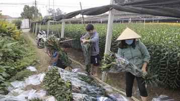 Giá hoa thấp kỷ lục, làng Tây Tựu, Hà Nội buồn thảm giữa 'bão' COVID-19