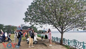 'Cây cô đơn' hồ Tây – địa điểm 'sống ảo' mới của giới trẻ Hà Nội