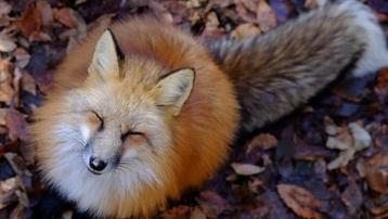 'Tan chảy' trước những hòn đảo thiên đường của động vật ở Nhật Bản