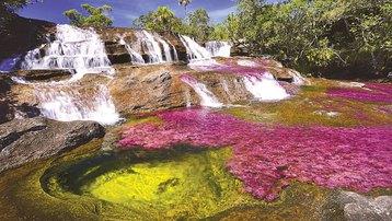 Cano Cristales - kỳ quan thiên nhiên của Colombia