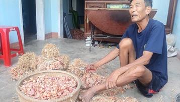 Nông dân 'sốc' vì hành củ rớt giá kỷ lục từ 60.000 đồng còn 5.000 đồng